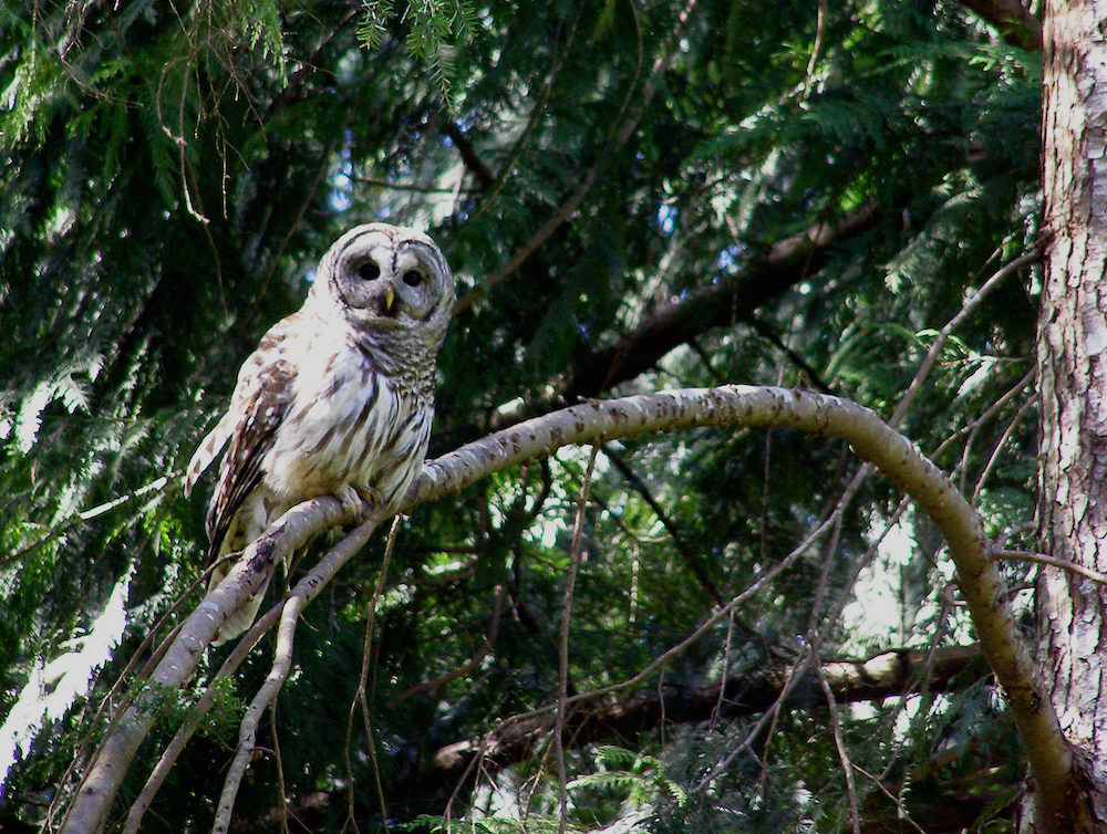 Owls Are the Best Field Assistants in Biodiversity Studies