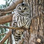 alt - Photo Ray Grout, Owl Cottage.
